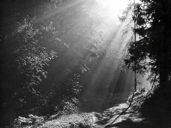 Борис Чигишев (1926–2010). Утро в лесу. 1981